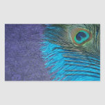 Purple and Teal Peacock Rectangular Sticker