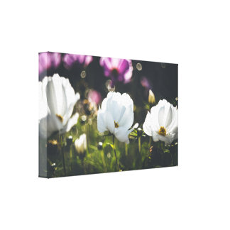 Purple and white anemone flowers canvas print
