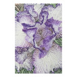 Purple and white bearded iris flower canvas print