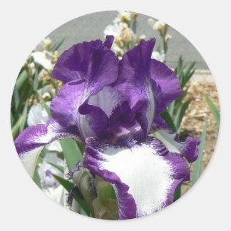 Purple and White Iris Classic Round Sticker