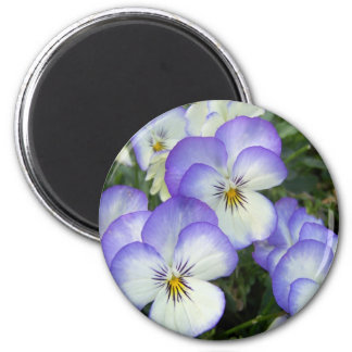 Purple and White Pansies Magnet