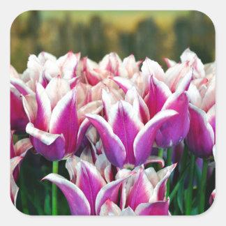 Purple and white spring tulips square sticker