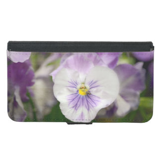 Purple And White Violas