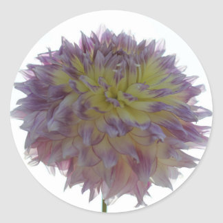 purple and yellow dahlia stickers