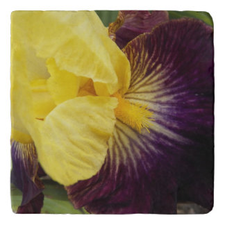 Purple and Yellow Iris Floral Trivet