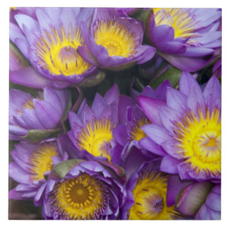 Purple and yellow water lilies tile