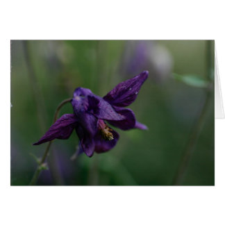 Purple aquilegia card