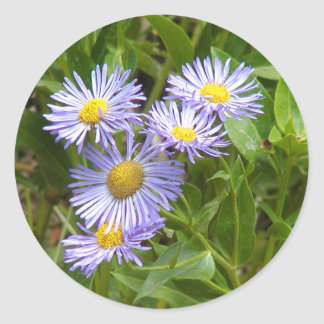 Purple Aster Classic Round Sticker