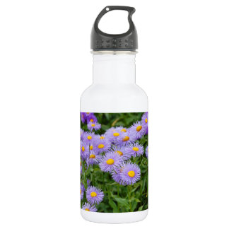 Purple aster flower garden