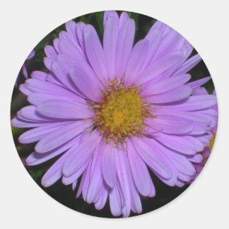 Purple Aster magnet Round Sticker