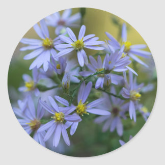 Purple Autumn Asters Floral Wildflower Stickers