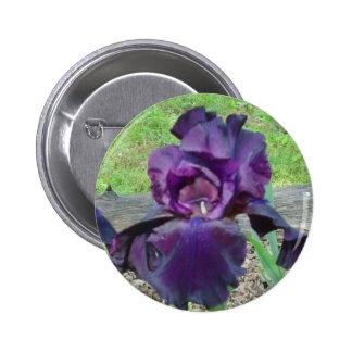Purple Bearded Iris Button