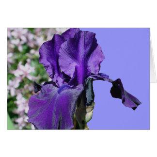 Purple Bearded Iris Flower Photography Card