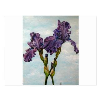 Purple bearded iris flowers postcard