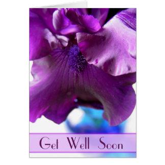Purple Bearded Iris Get Well Soon Card