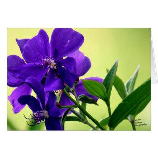 Purple Beauty Flower (5.0) Card