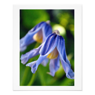 Purple Bell Flowers Wall Decor Poster Photo