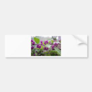 Purple Berries Bumper Sticker