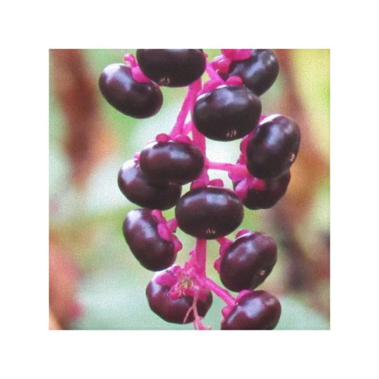 Purple berries canvas print