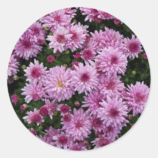 Purple Chrysanthemum X Morifolium Flowers Classic Round Sticker