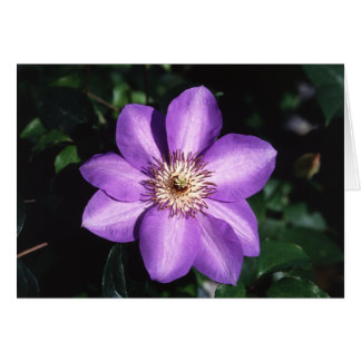 Purple Clematis Bloom and Facts Card