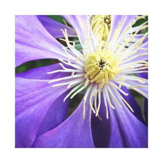Purple Clematis Canvas