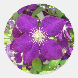 Purple Clematis Classic Round Sticker