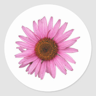 Purple Cone Flower Classic Round Sticker
