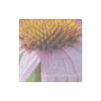 Purple Cone Flower Magnet Stone Magnets