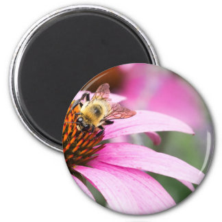 Purple Cone Flower with Bee Magnet