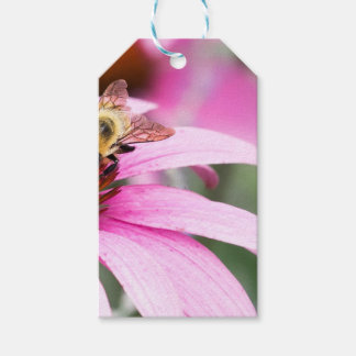 Purple Cone Flower with Bee Pack Of Gift Tags
