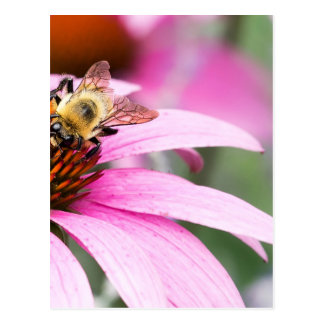 Purple Cone Flower with Bee Postcard
