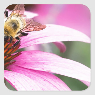 Purple Cone Flower with Bee Square Sticker