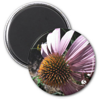 Purple Coneflower 2 Inch Round Magnet