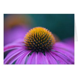 Purple coneflower (Echinacea purpurea) Card