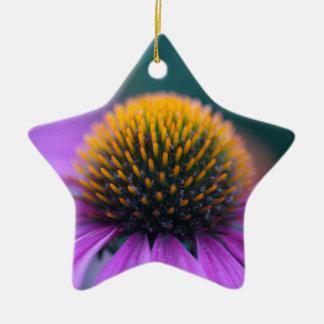 Purple coneflower (Echinacea purpurea) Ceramic Star Ornament