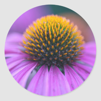 Purple coneflower (Echinacea purpurea) Classic Round Sticker