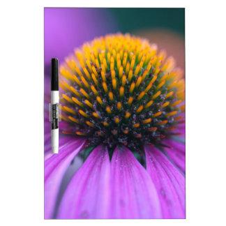 Purple coneflower (Echinacea purpurea) Dry Erase Board