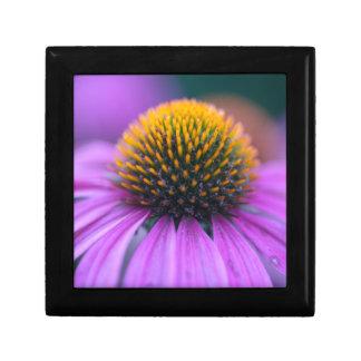 Purple coneflower (Echinacea purpurea) Gift Box