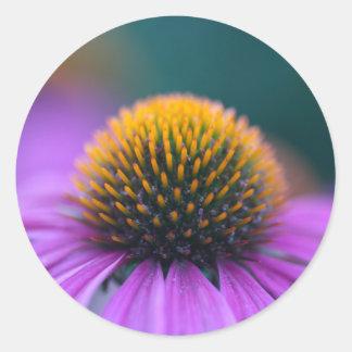 Purple coneflower (Echinacea purpurea) Round Sticker