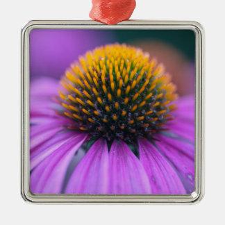 Purple coneflower (Echinacea purpurea) Silver-Colored Square Ornament
