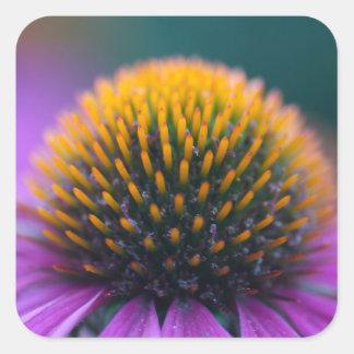 Purple coneflower (Echinacea purpurea) Square Sticker