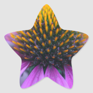 Purple coneflower (Echinacea purpurea) Star Sticker