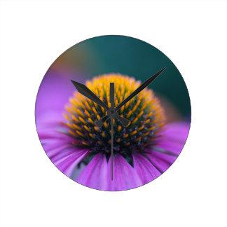 Purple coneflower (Echinacea purpurea) Wallclocks