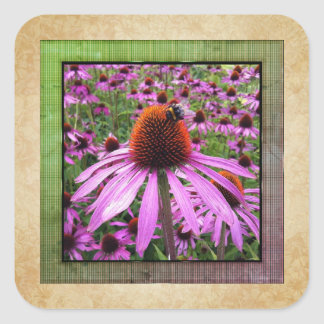 Purple Coneflower Echinacea Wildflower Sticker