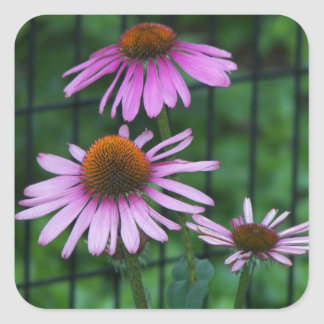 Purple Coneflower Floral Square Sticker