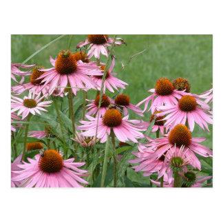 Purple Coneflower Garden with Bees Postcard