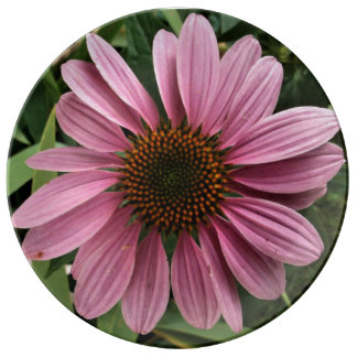 Purple Coneflower Plate