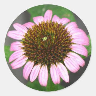 Purple Coneflower Round Sticker