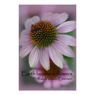 Purple Coneflower wildflower up close on canvas Poster